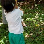 梅の木観察