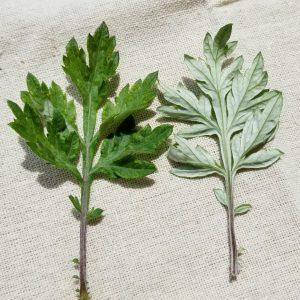 ヨモギの葉